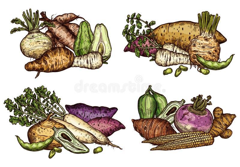 Légumes frais de ferme et croquis exotiques de haricots illustration libre de droits