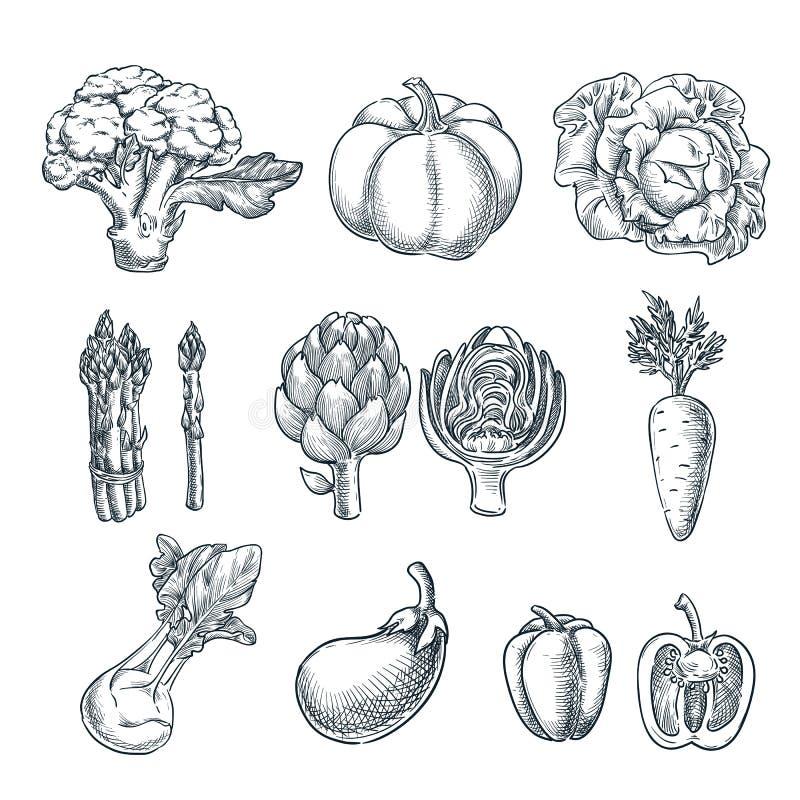 Légumes frais de ferme réglés Illustration de croquis de vecteur Automne cultivant et moissonnant illustration libre de droits