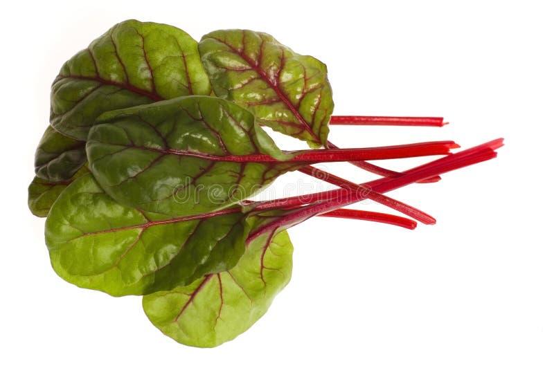 Légumes frais - poirée photographie stock libre de droits