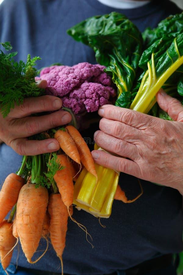 Légumes frais tenus par l'homme photographie stock