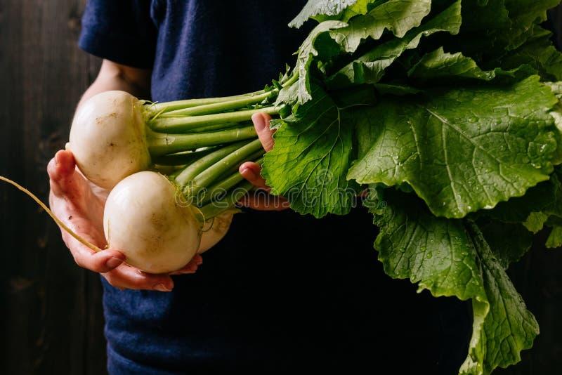 Légumes moissonnés frais organiques Le ` s d'agriculteur remet tenir le navet frais, plan rapproché photo stock