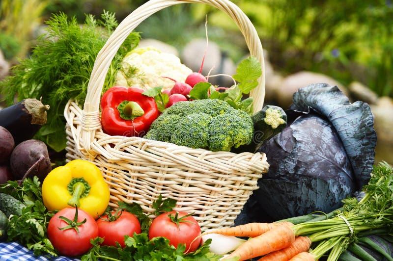 Légumes organiques frais dans le panier en osier dans le jardin photo stock