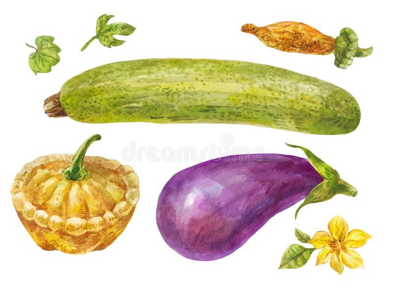Légumes peints dans l'aquarelle Courgette, aubergine et courge illustration libre de droits