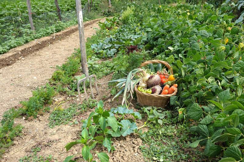 Légumes quatre de moisson photo stock