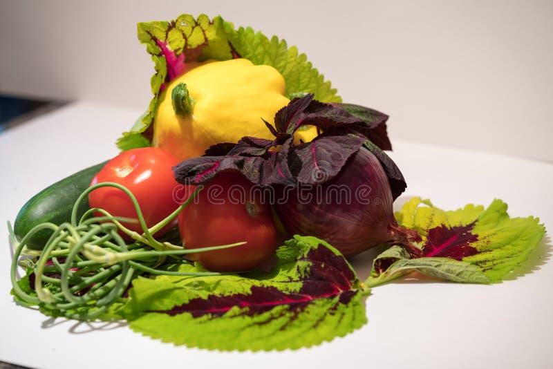 Légumes sélectionnés frais photographie stock libre de droits