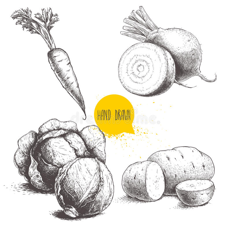 Légumes tirés par la main de style de croquis réglés Moitié des choux, des racines de betterave, des pommes de terre et de la car illustration stock