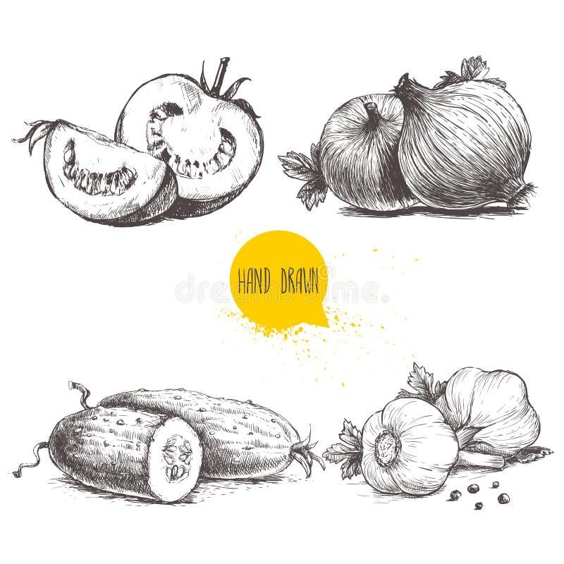 Légumes tirés par la main de style de croquis réglés Tomates, oignons, concombres et ail coupés en tranches illustration stock