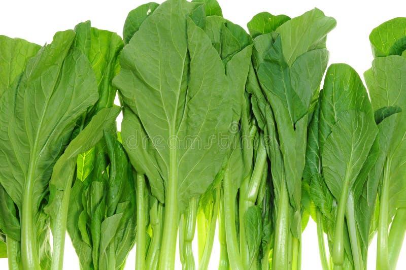 Légumes verts, Chye Sim photo libre de droits