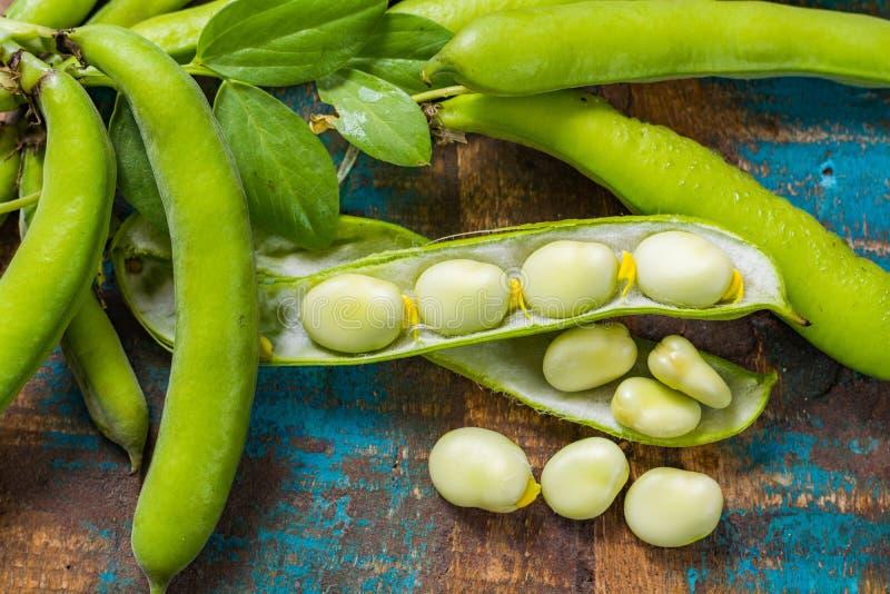 Légumineuses fraîches saines, nouvelle récolte sur de larges haricots blancs de Lima photo libre de droits