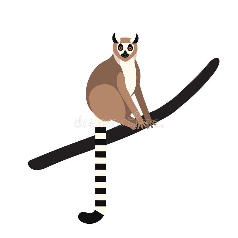 lémur Anneau-coupé la queue se reposant sur la branche d'arbre d'isolement sur le fond blanc Portrait d'animal herbivore sauvage  illustration libre de droits