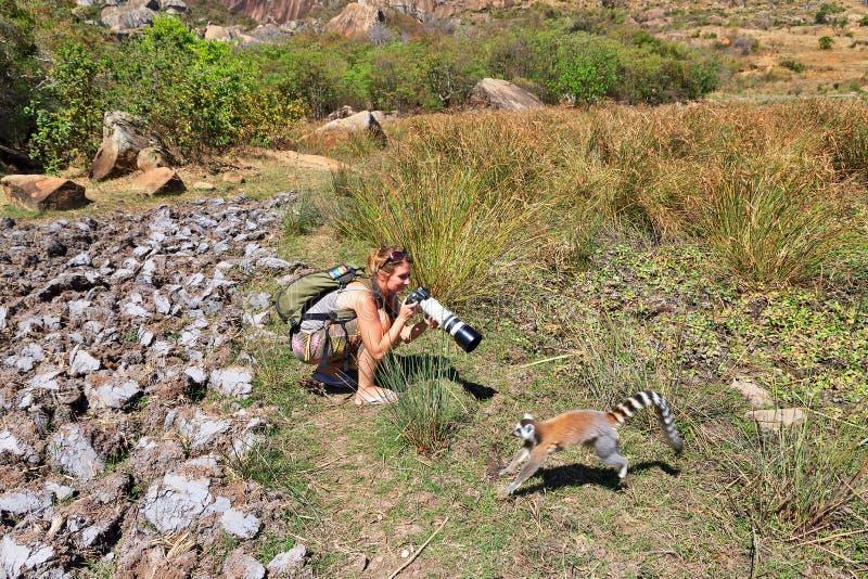 Lémur de touristes photos libres de droits