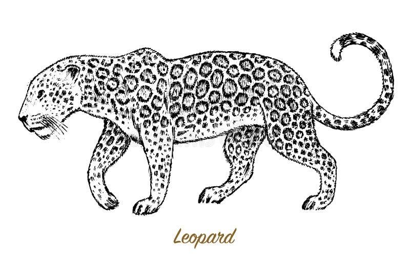 Léopard sauvage africain Chat d'Asiatique de profil Jaguar animal dans la jungle Illustration de tatouage Schéma tiré par la main illustration stock