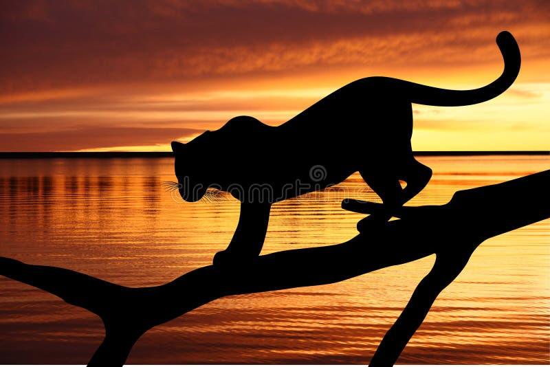 Léopard sur un branchement près d'une eau illustration libre de droits