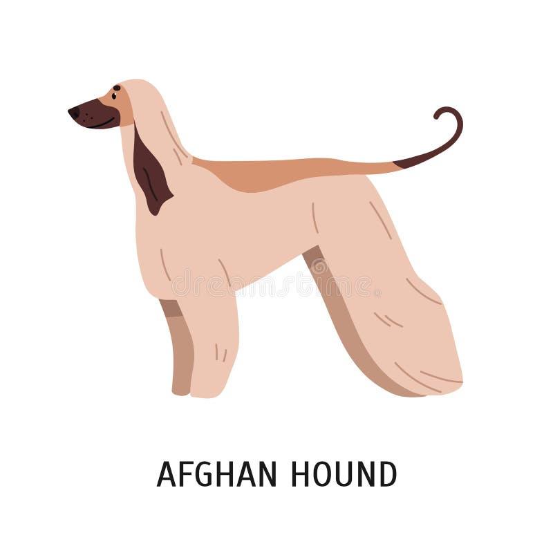 Lévrier afghan ou Tazi Chien magnifique de chasser la race avec de longs cheveux, vue de côté Animal de compagnie de race mignon  illustration stock