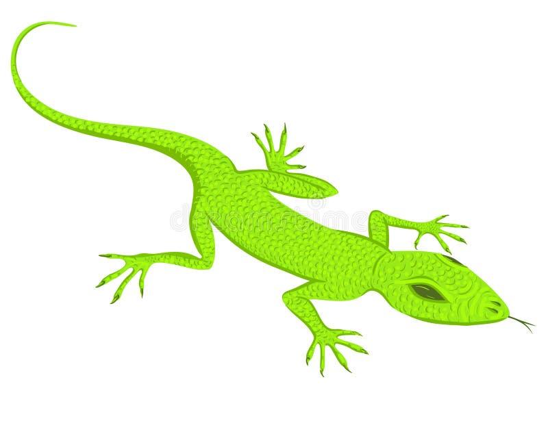 Lézard vert illustration stock