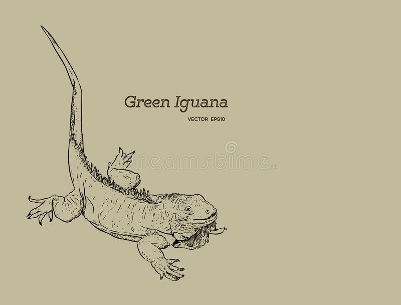 Lézard vert d'iguane, vecteur de croquis d'aspiration de main illustration libre de droits