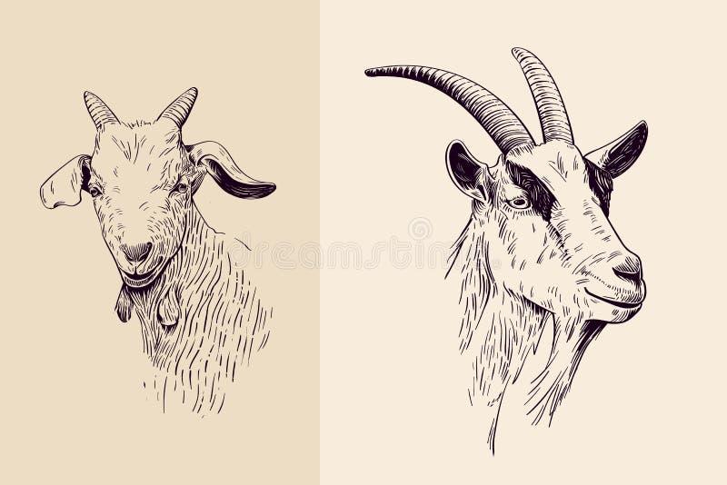 Línea arte de la cabra libre illustration