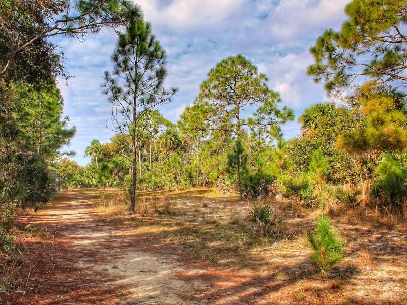 Línea de árboles de pino rastro de la Florida fotos de archivo libres de regalías