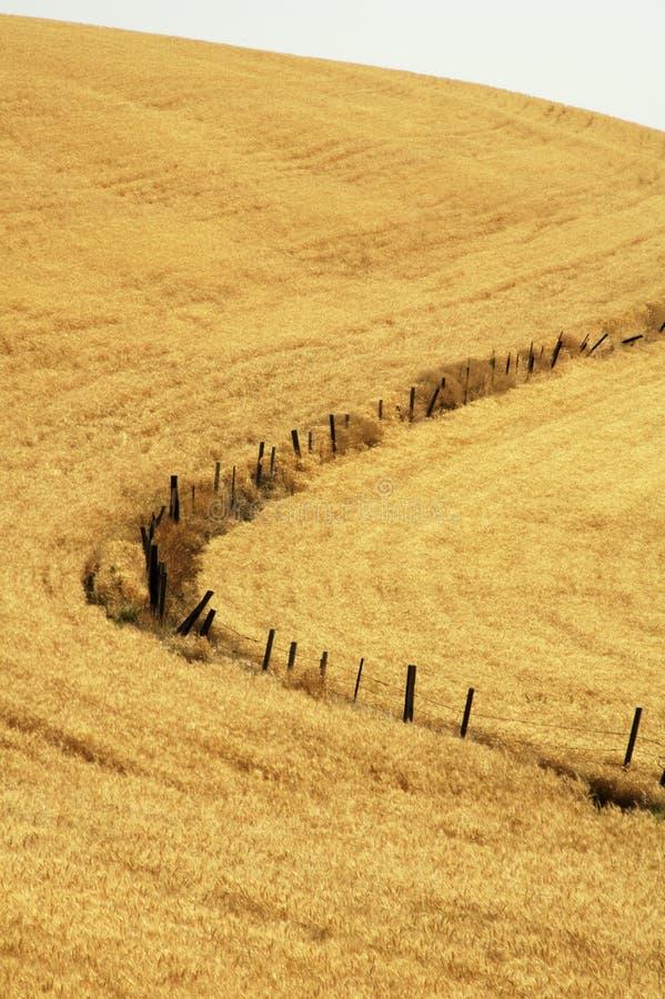 Línea de cerca en trigo foto de archivo libre de regalías