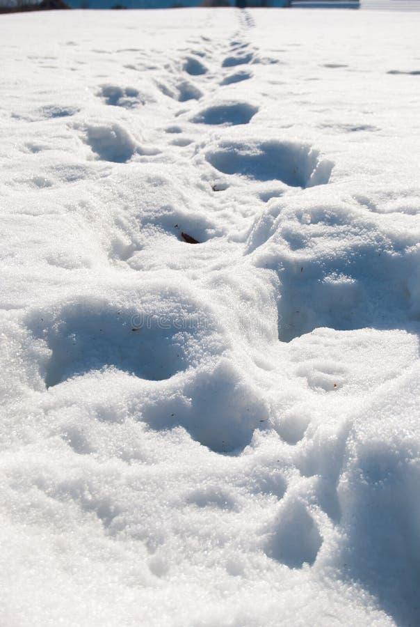Línea de huellas hundida en la nieve foto de archivo libre de regalías