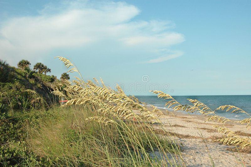 Línea de la playa imagenes de archivo