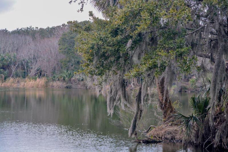 Línea de la playa en Kathryn Abbey Hanna Park, el condado de Duval, Jacksonville, la Florida fotos de archivo