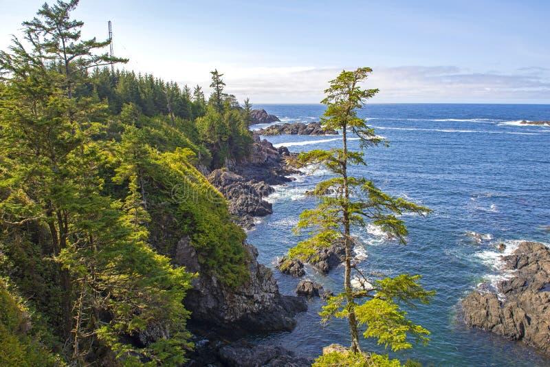Línea de la playa rugosa del rastro pacífico salvaje en Ucluelet, isla de Vancouver, A.C. imagenes de archivo