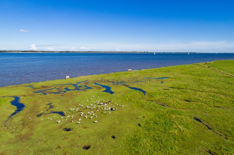 Línea de la playa y campos verdes con un cielo azul foto de archivo
