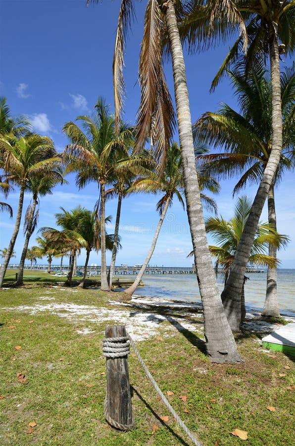 Línea de la playa y embarcadero bien preparados fotos de archivo libres de regalías