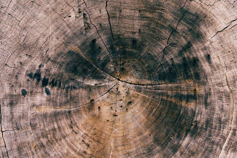 L?nea de madera textura de la grieta para el papel pintado foto de archivo libre de regalías
