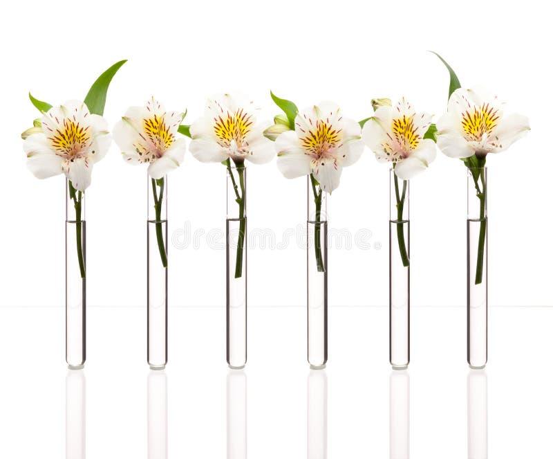 Línea de prueba-tubos con las flores imagen de archivo