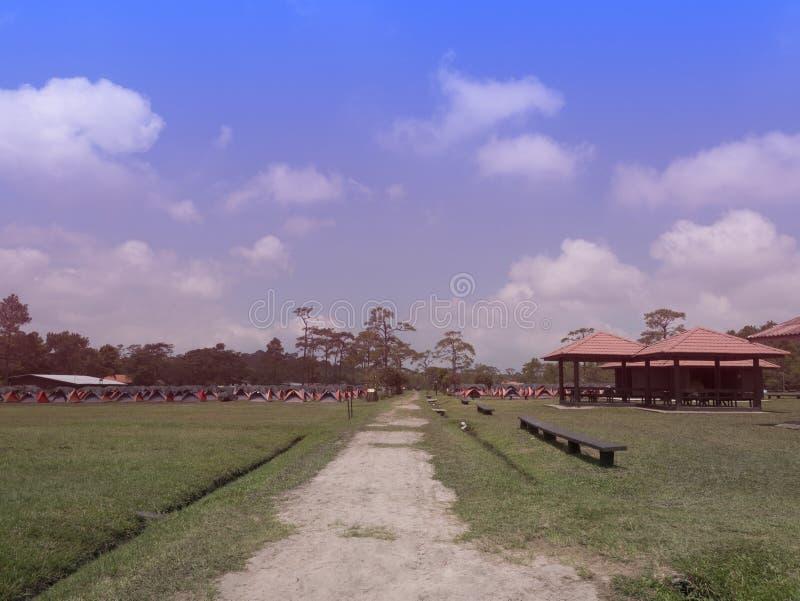 Línea de tienda colorida para la estancia turística con un fondo del árbol de pino en el parque nacional de Phukradueng, Loei, Ta foto de archivo libre de regalías