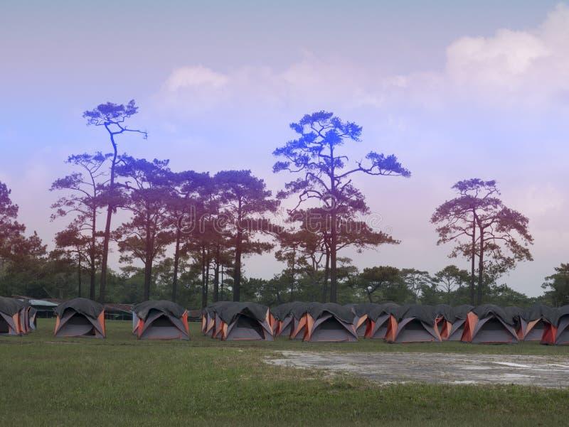 Línea de tienda colorida para la estancia turística con un fondo del árbol de pino en el parque nacional de Phukradueng, Loei, Ta fotos de archivo libres de regalías