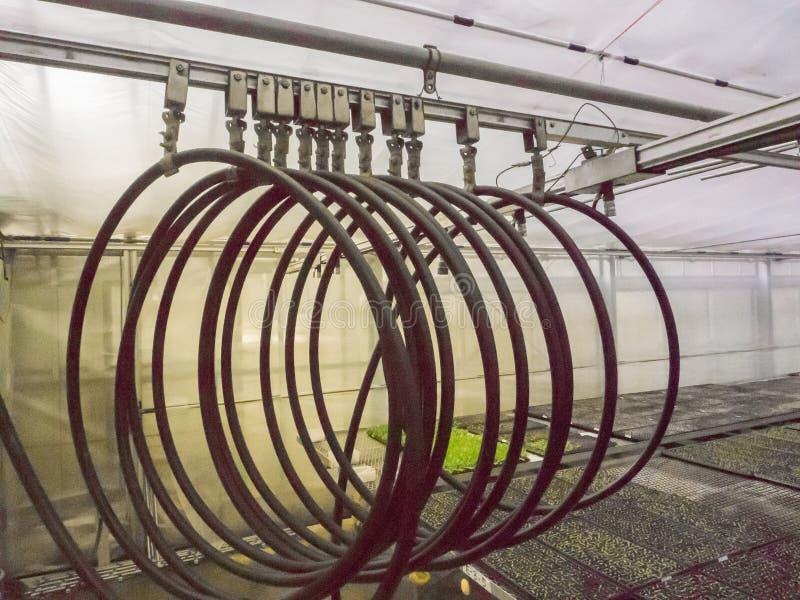 Línea del tubo de la irrigación para el almácigo fotografía de archivo libre de regalías