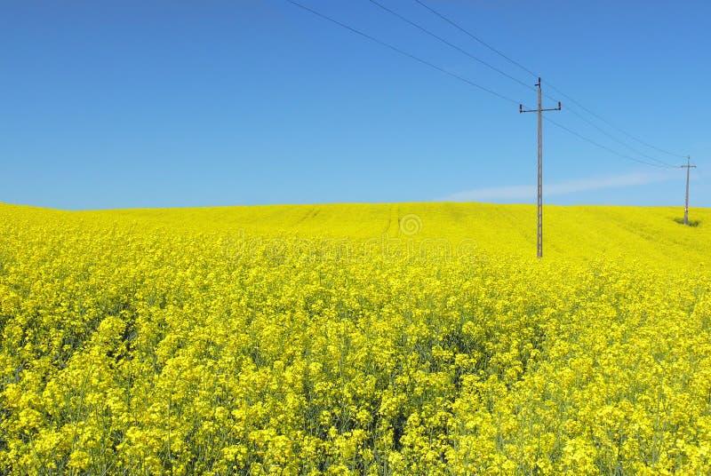Línea eléctrica de la naturaleza y de la energía sobre las flores amarillas imagen de archivo