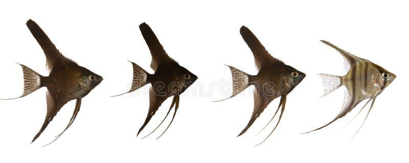 Línea escalar de los pescados imagen de archivo libre de regalías