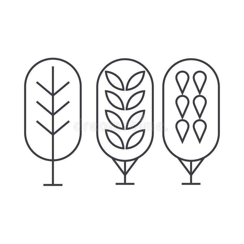 Línea fina concepto del árbol de abedul del icono Muestra linear del vector del árbol de abedul, símbolo, ejemplo libre illustration