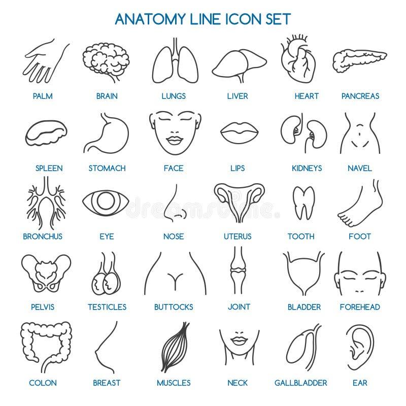 Línea iconos de la anatomía stock de ilustración