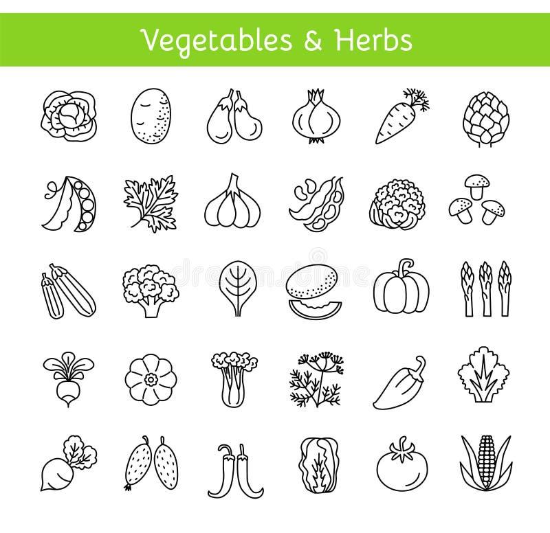 Línea iconos del vector con las verduras y las hierbas Forma de vida sana libre illustration