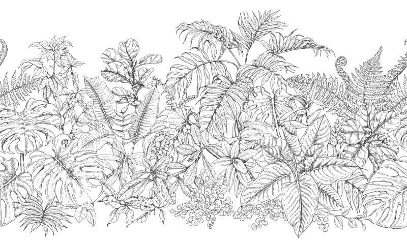 Línea modelo horizontal de las plantas tropicales libre illustration
