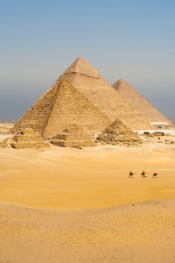 Línea pirámides de los camellos de la caminata todo verticales imagen de archivo libre de regalías