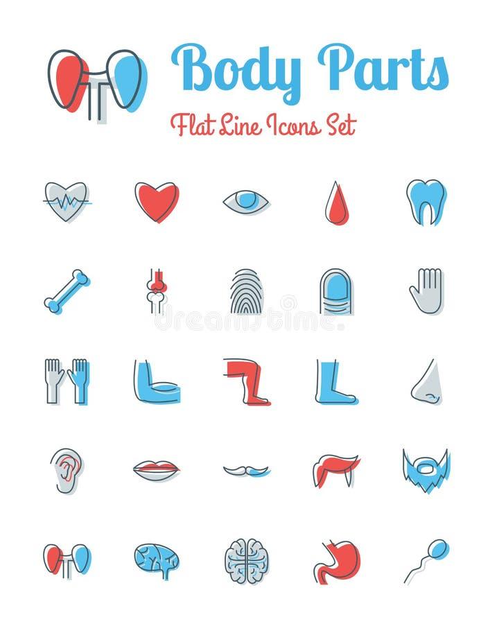 Línea plana fijada iconos estilo de las partes del cuerpo ilustración del vector