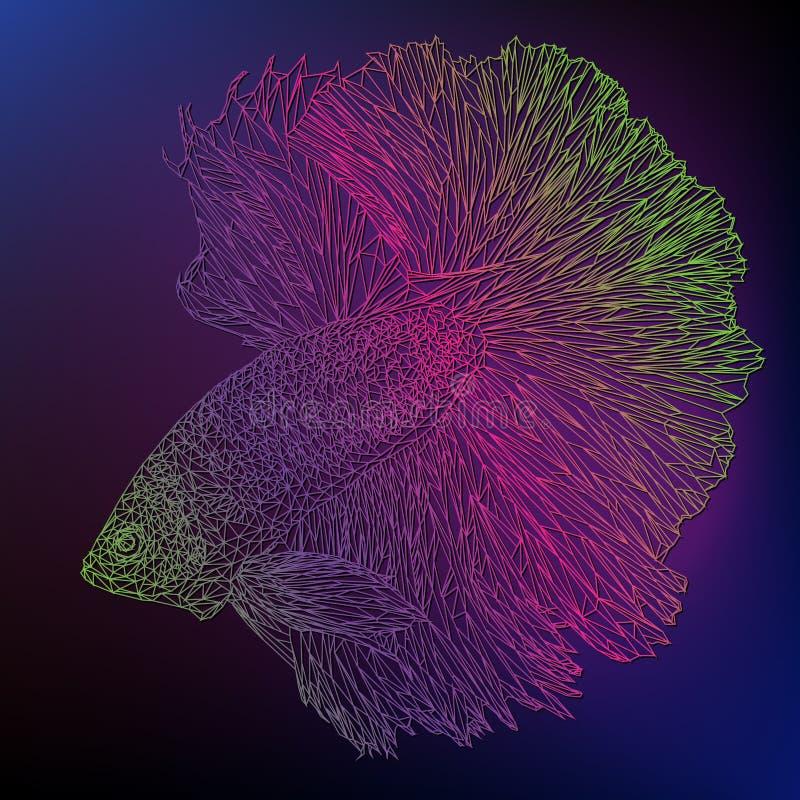 Línea poligonal arte de color de betta saimese imagen de archivo