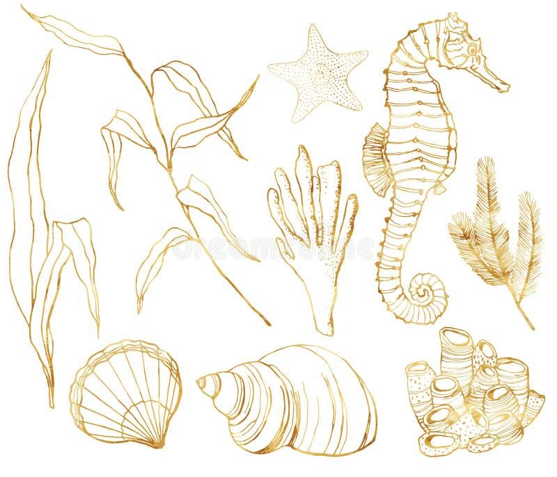 Línea sistema del vector del submarino del arte Seahorse pintado a mano, laminaria, corales y cáscaras de la acuarela aislados en libre illustration