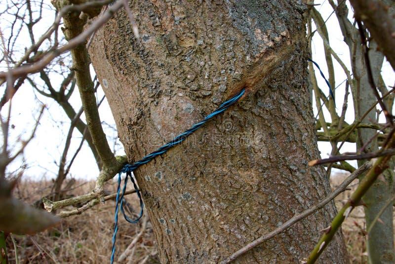 Línea telefónica directa al árbol foto de archivo libre de regalías