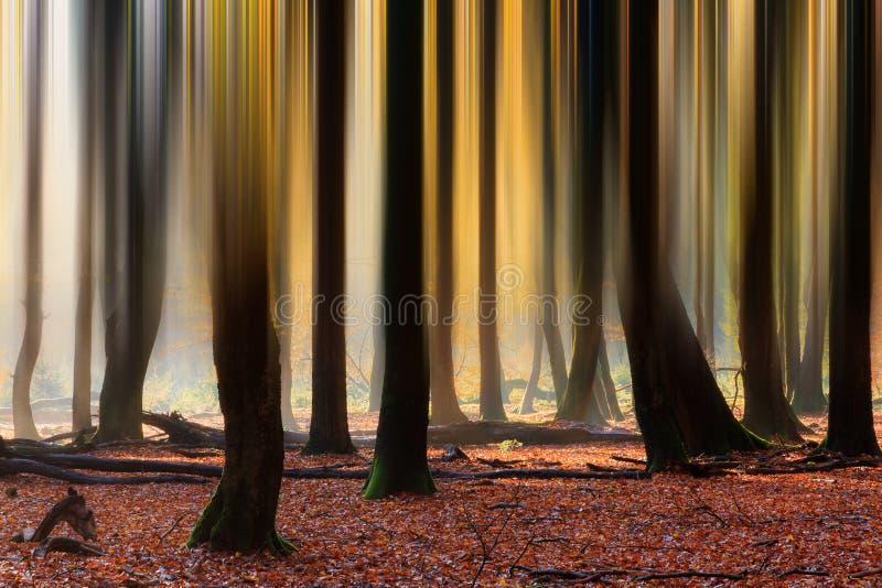 Líneas borrosas en otoño foto de archivo