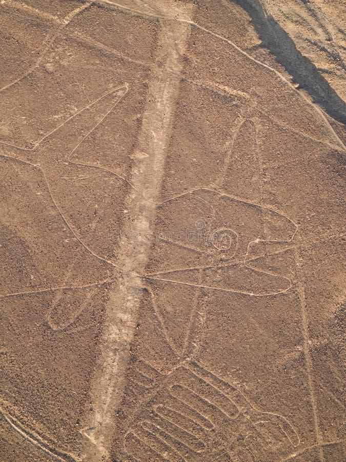 Líneas de Nazca foto de archivo