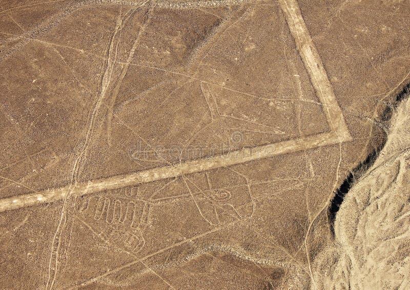Líneas de Nazca - ballena imágenes de archivo libres de regalías
