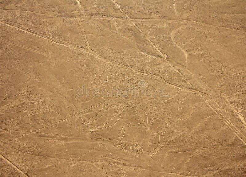 Líneas de Nazca - mono imagen de archivo