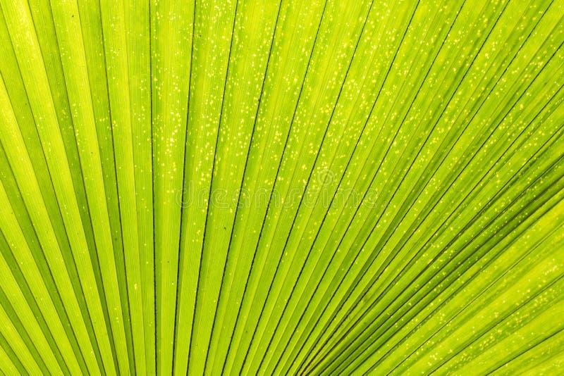Líneas y texturas de la palma verde imagen de archivo libre de regalías